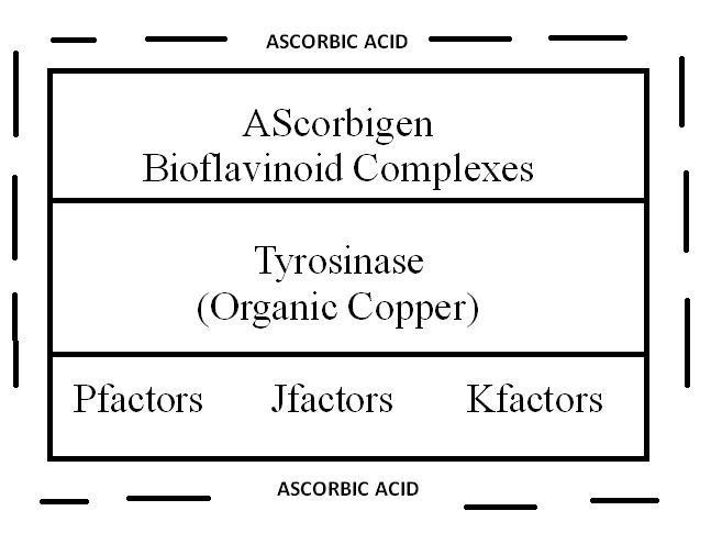ascorbic acid, wellness, immune system